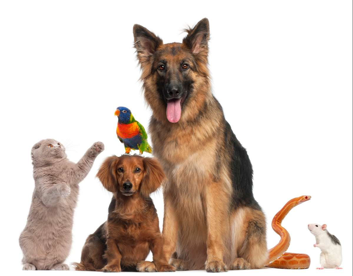 Group of animals in front of white background (R) (S)